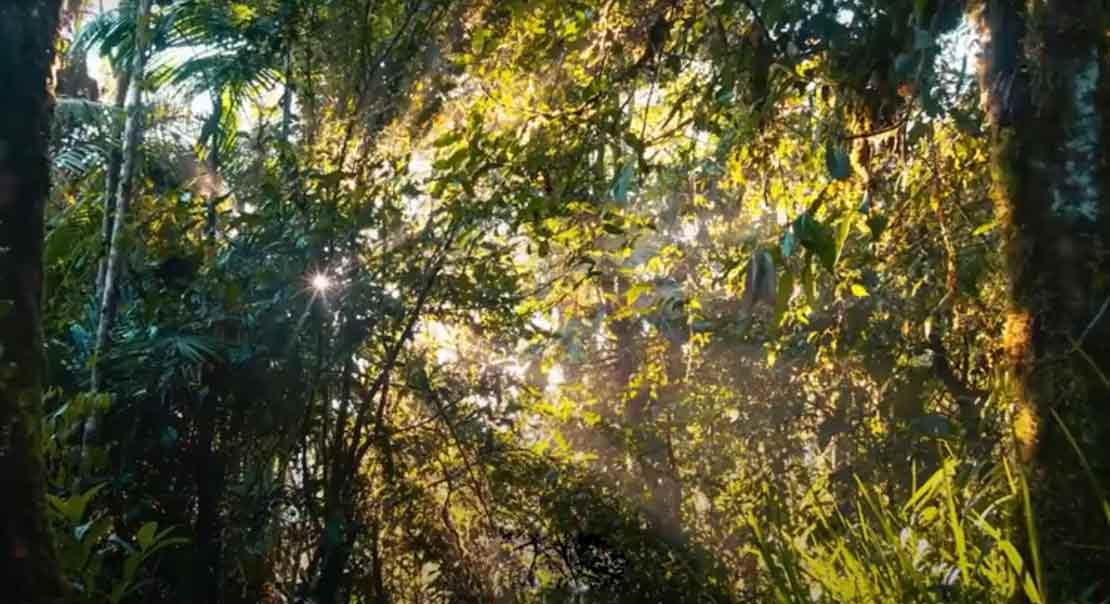 PJL Blog, einfache Maßnahmen zum Klimaschutz
